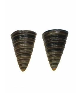 Culture Mix oorbellen gemaakt van een halve schelp